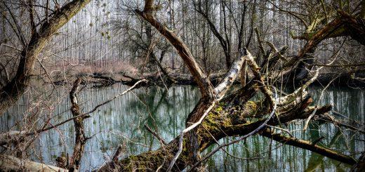 Wohneigentumsanlage mit Bäumen: laienhafte äußere Sichtprüfung reicht aus